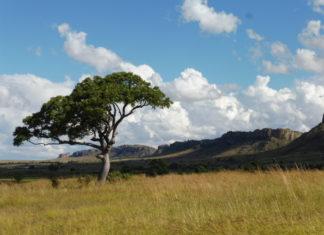 Parcs Nationaux de Madagascar : parfaites destinations touristiques pour un séjour de rêves !