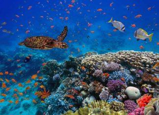 La protection de la biodiversité de Madagascar : entre les mains de passionnés !