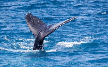 La baleine est une belle créature sous-marine