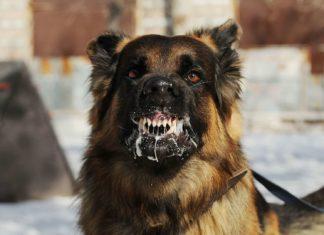 La Rage: une maladie dangereuse pour nos animaux de compagnies