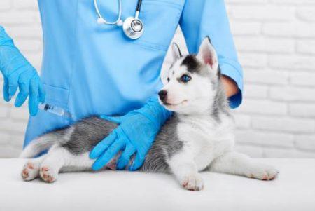 Le vaccin est la première mesure de prévention contre la rage