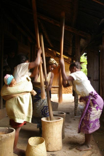Traditionnellement, piler le riz est réservé aux femmes à Madagascar, c'est la dernière étape de la riziculture