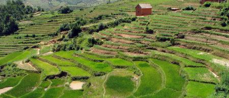 On peut admirer les rizières en terrasses le long des routes nationales, notamment sur les hauts plateaux