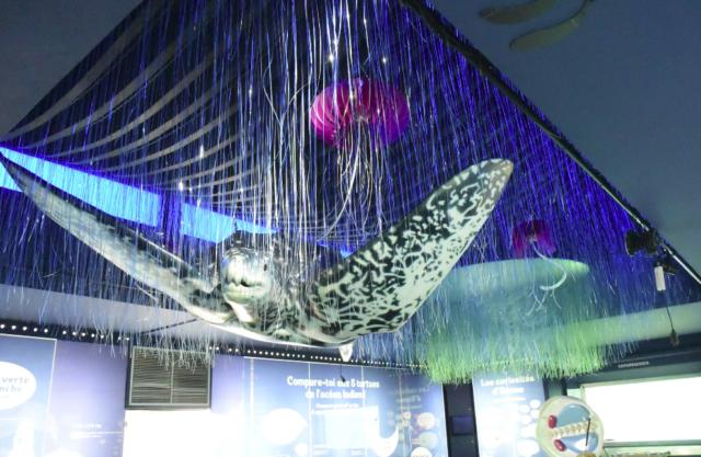 Cette exposition avait pour but, selon Tatiana Patchama, de sensibiliser les gens concernant les méfaits du plastique sur la nature et l'océan