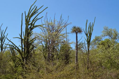 La végétation du sud est adaptée aux tortues radiata