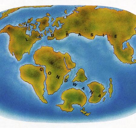 Peu à peu, les continents que nous connaissons aujourd'hui se sont dispersés