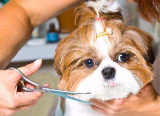 Toiletter le chien: son importance et les étapes à suivre pour le faire!