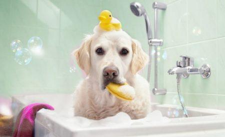 Faites prendre un bon bain à votre chien