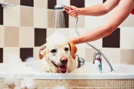 Toiletter son chien s'est d'abord et avant tout garantir sa santé