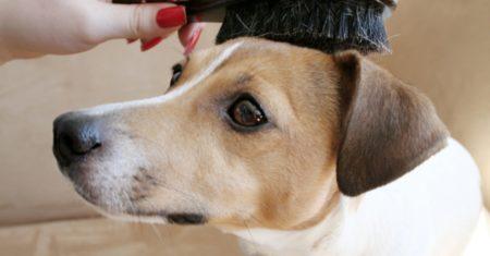 Le brossage est la première étape lorsque vous toiletter votre chien