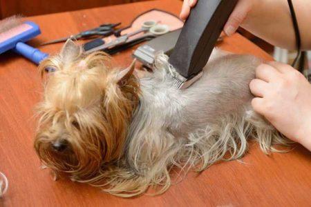 Les chiens méritent aussi d'avoir une jolie coupe;-)