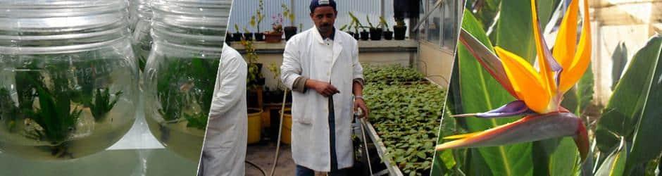Biotechnologie et Agronomie à l'ISPM