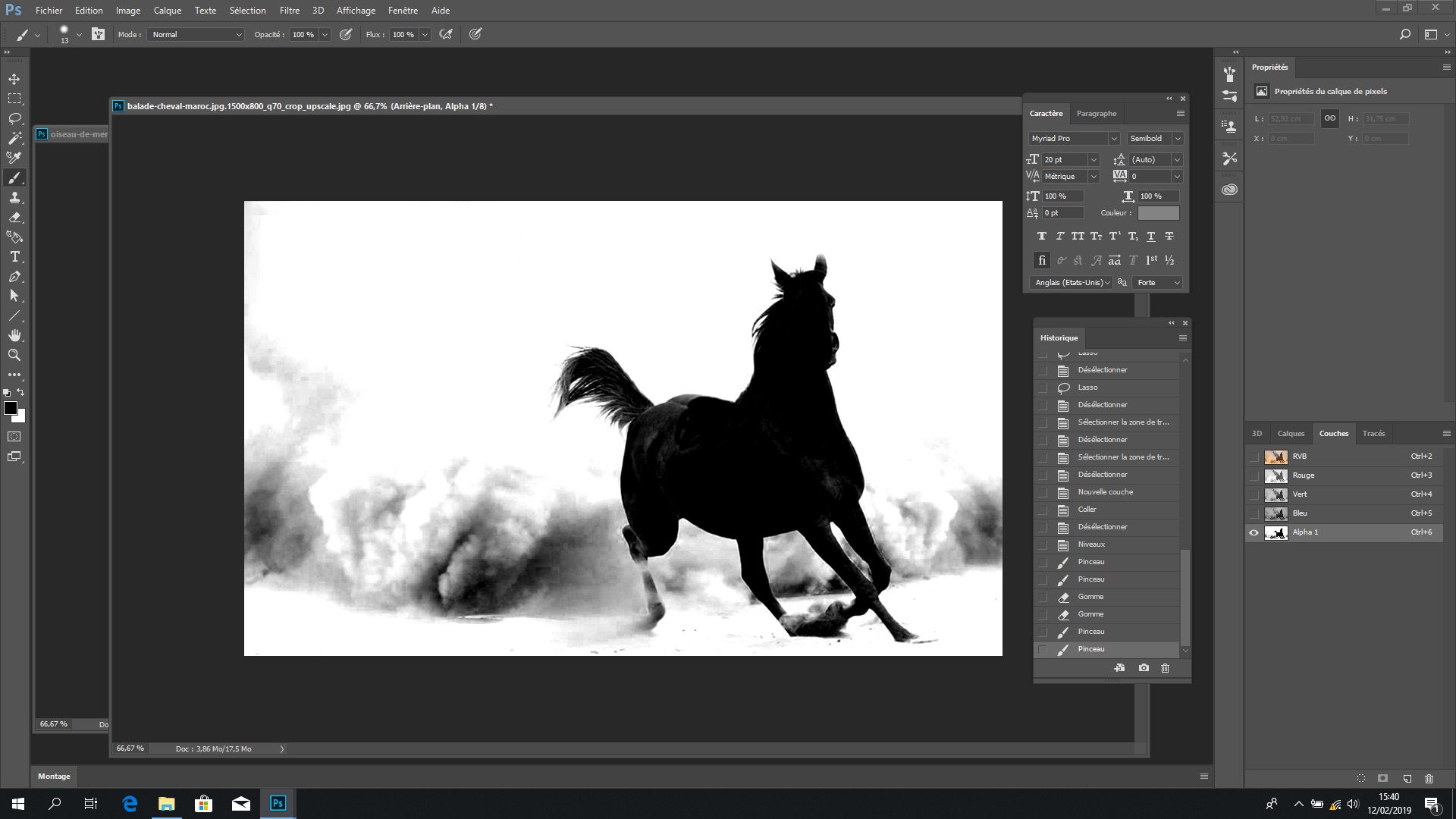 Hlava velmi černého koně na bílém pozadí