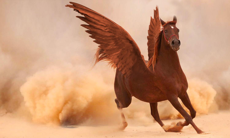 Úprava Photoshopu: tady je konečný výsledek, máme pěkného okřídleného koně!