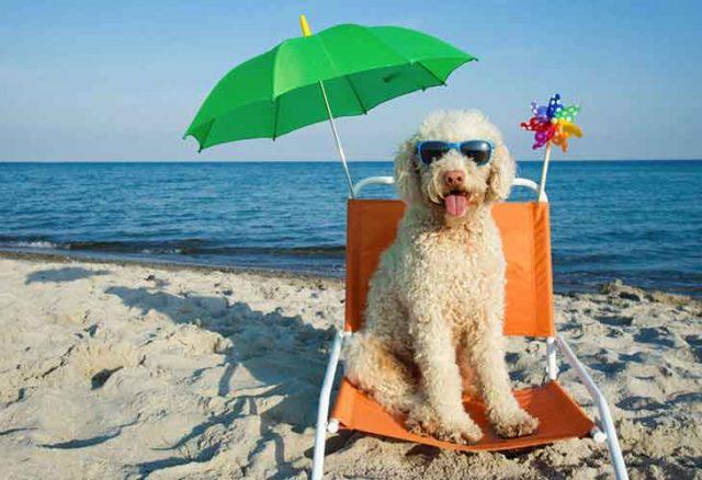 Las vacaciones riman con playa: el mar azul y la arena caliente atraen al 52% de los veraneantes.