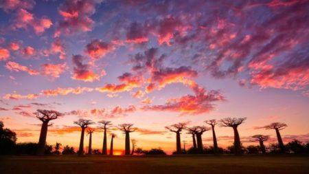 L' Allée des Baobabs, everyone's fantasy in tourism in Madagascar