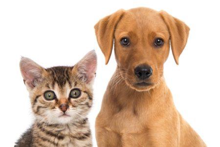 Los tananarivianos todavía no pueden elegir entre perro y gato