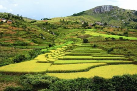 Si seguimos así, Madagascar ya no importará arroz