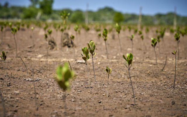 Rozvoj země začíná stabilitou jejího prostředí (doslova i obrazně)